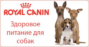 Полезное питание для собак Royal Canin