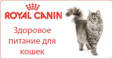 Полезное питание для кошек Royal Canin